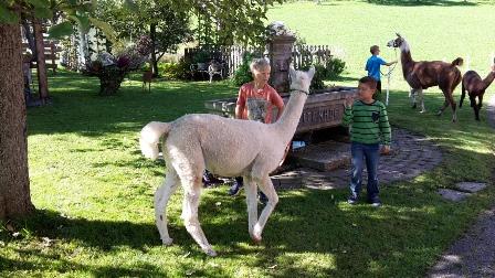 4a Alpakas - Volksschule Bad Hring